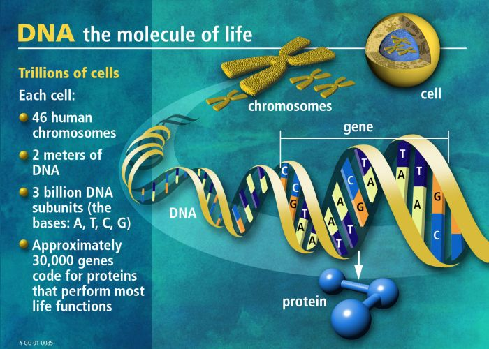 DNA: The molecule of life.