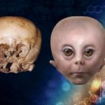 The Starchild Skull with artists impression of how it may have looked in life.