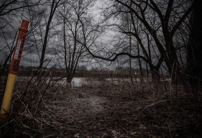 Woodland around Pripyat