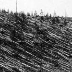 Tunguska flattened trees.