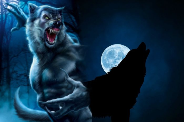 A picture of a werewolf blended into a wolf howling at the moon