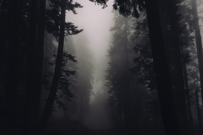 A dark forest with mist covering the sky