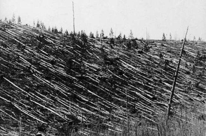 The flattened trees of the Tunguska region