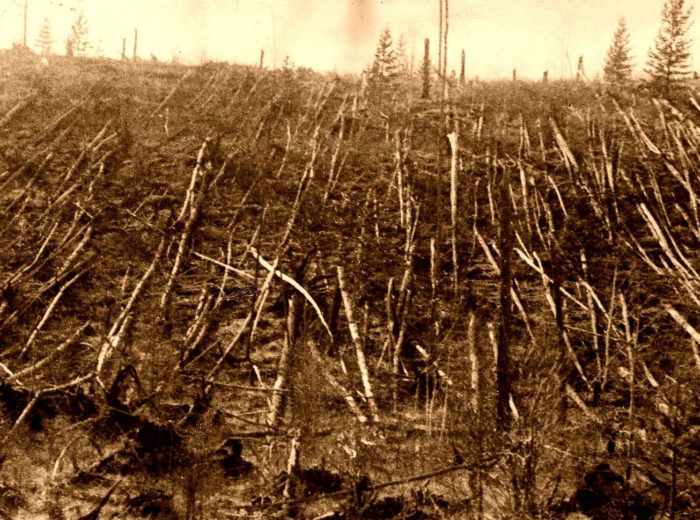 Pictures of the tree damage at Tunguska