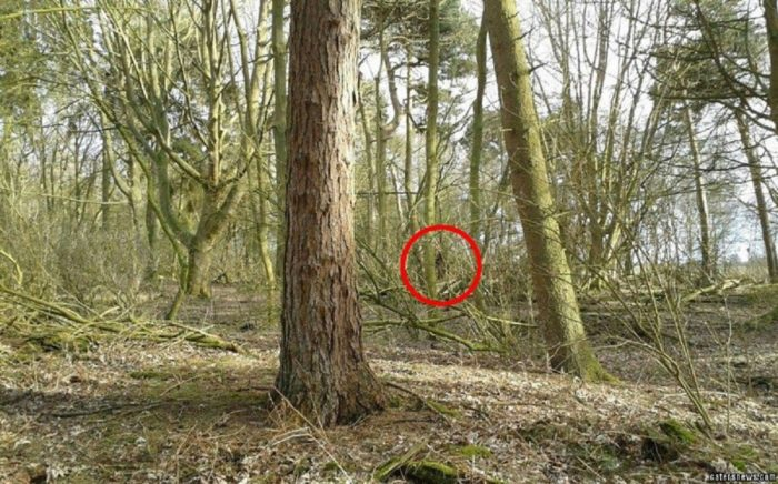 A picture claiming to show a real Bigfoot