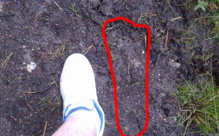 A picture showing a Bigfoot footprint