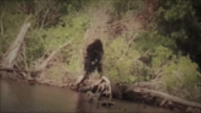 Does this image show a Bigfoot in Virginia?