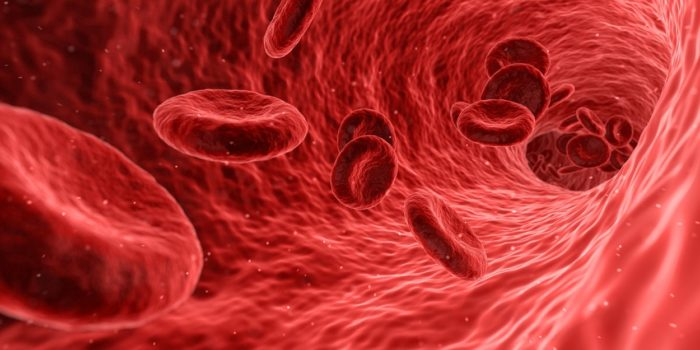 Illustration of blood cells traveling around the body