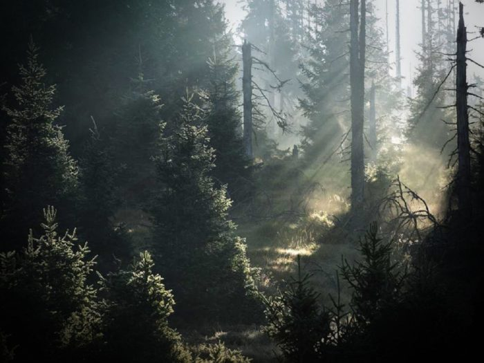 A view of the woods with sunlight poking through the trees
