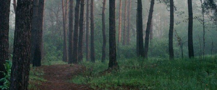 A close up of a misty woodland scene