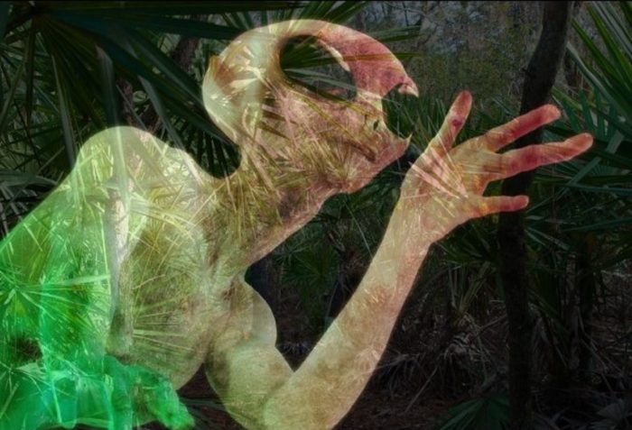 A superimposed alien entity over woodland