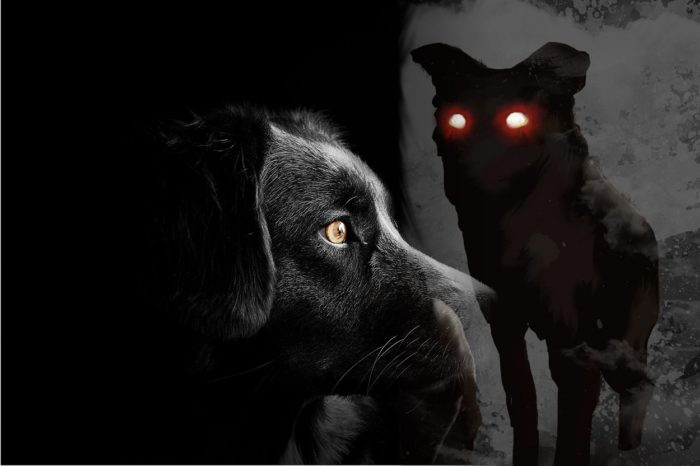 A picture of a black dog blended into a depiction of demonic dog with red eyes