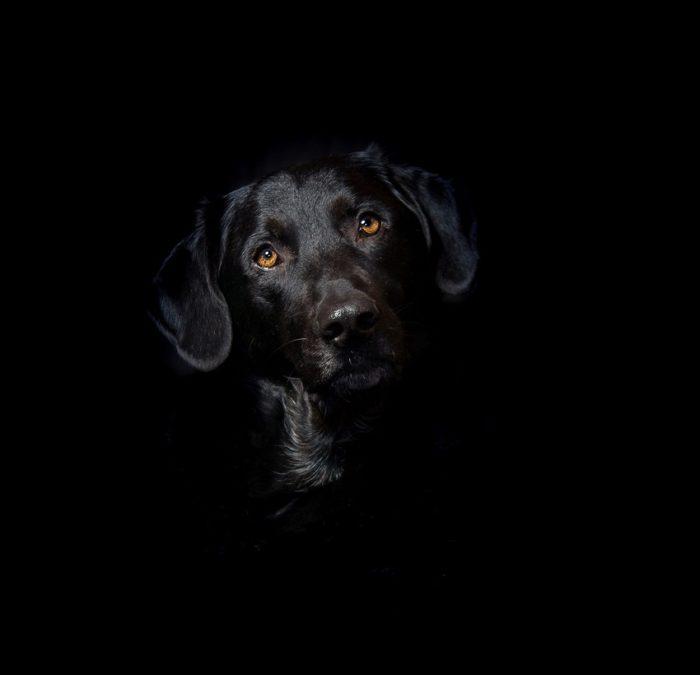 A close-up of black dog
