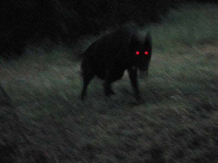 A picture of a black dog with glowing red eyes