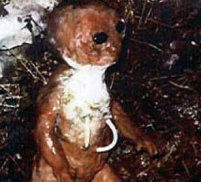 Picture of the alleged alien creature