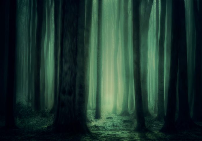 A forest at night glowing green