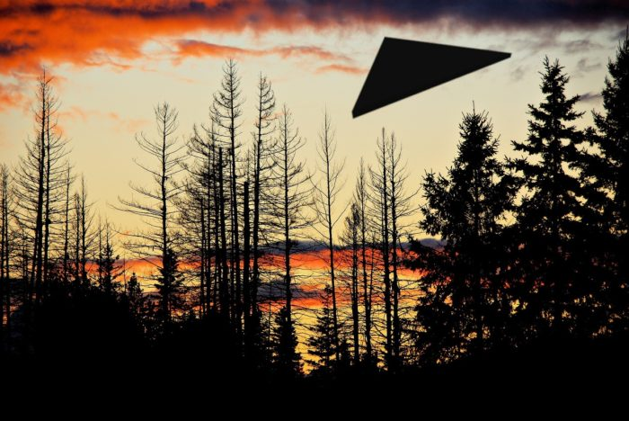 A superimposed UFO over a a forest at dawn