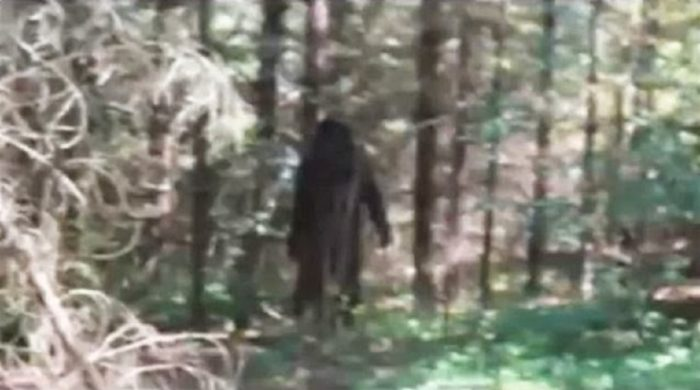 A picture showing an alleged Bigfoot