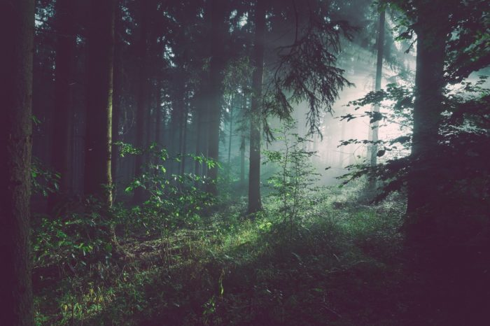 A picture of a dark forest