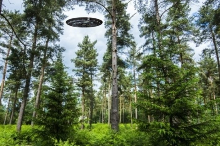 A superimposed UFO over the woods in the daylight