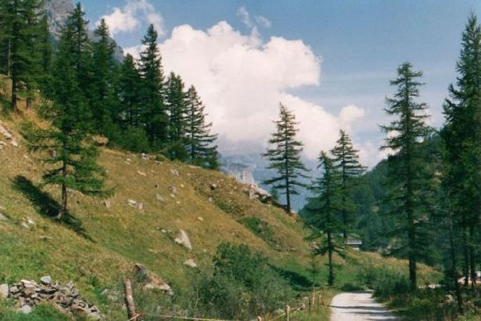 The Swiss mountains and woodland