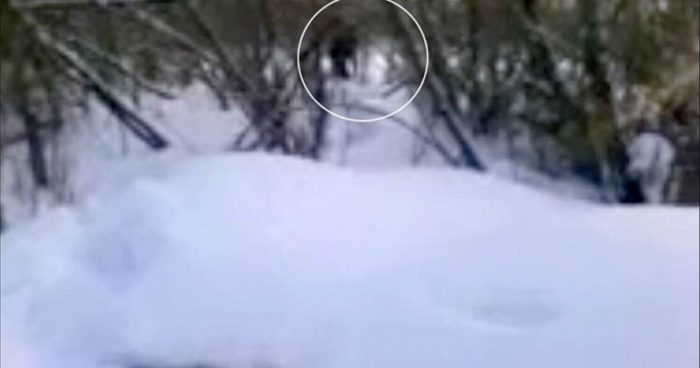 Picture claiming to show a real yeti?