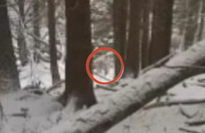 Footage claiming to show a real Yeti
