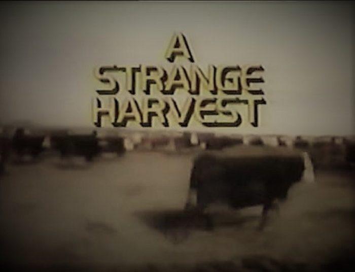 Still frame from A Strange Harvest
