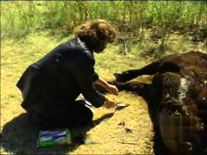 Linda Moulton Howe filming A Strange Harvest