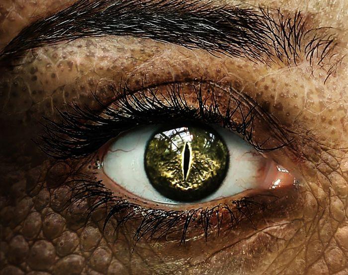A close-up of a reptilian eye